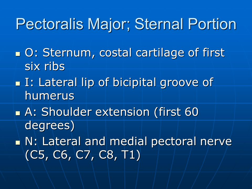 Pectoralis Major; Sternal Portion