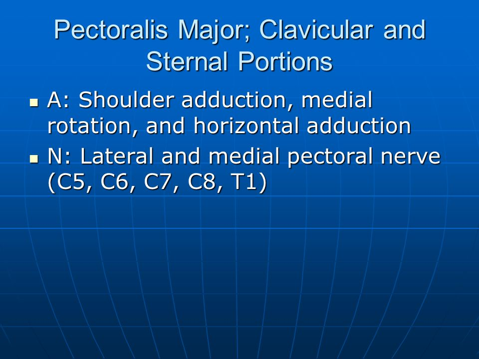 Pectoralis Major; Clavicular and Sternal Portions