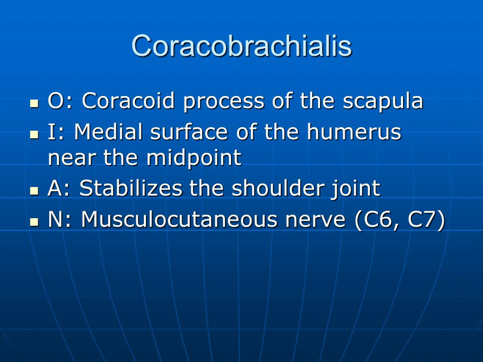 Coracobrachialis O: Coracoid process of the scapula