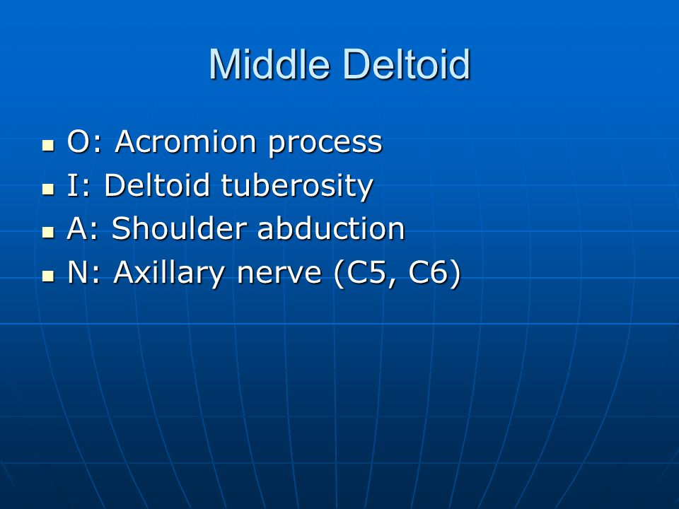 Middle Deltoid O: Acromion process I: Deltoid tuberosity