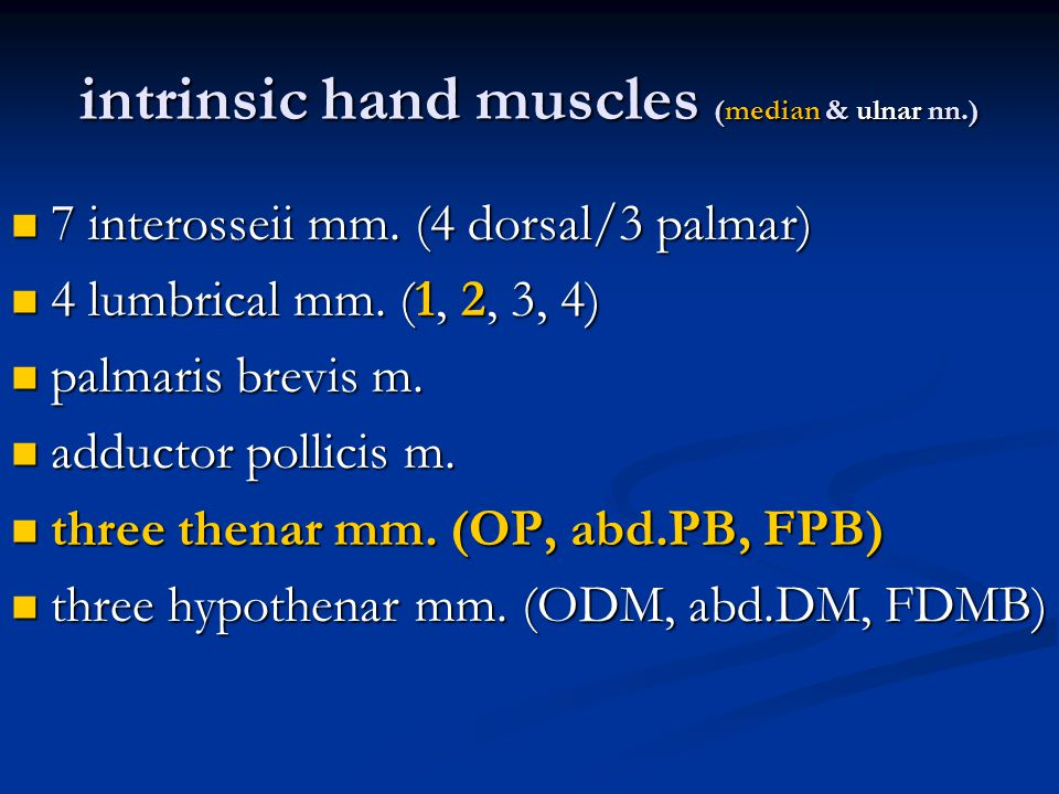 intrinsic hand muscles (median & ulnar nn.)