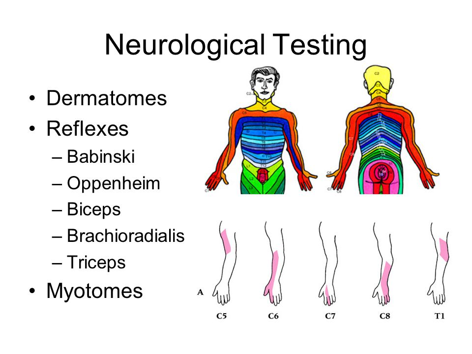 Neurological Testing Dermatomes Reflexes Myotomes Babinski Oppenheim