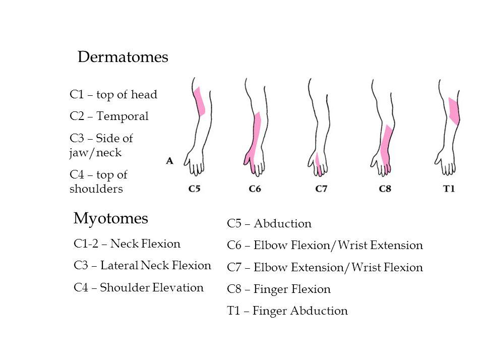 Dermatomes Myotomes C1 – top of head C2 – Temporal