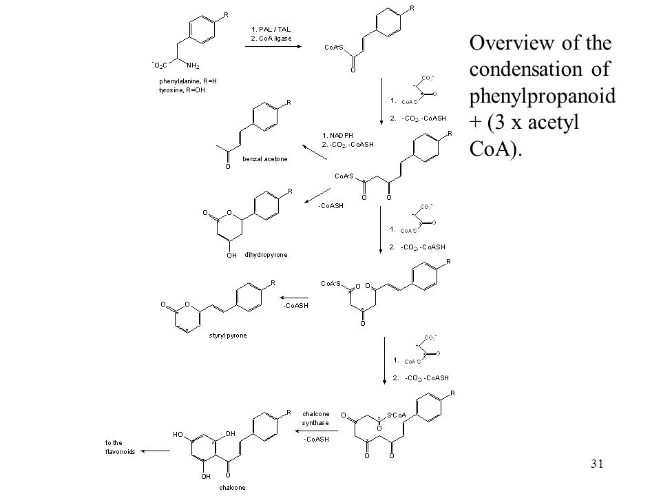 Overview of the condensation of phenylpropanoid + (3 x acetyl CoA).