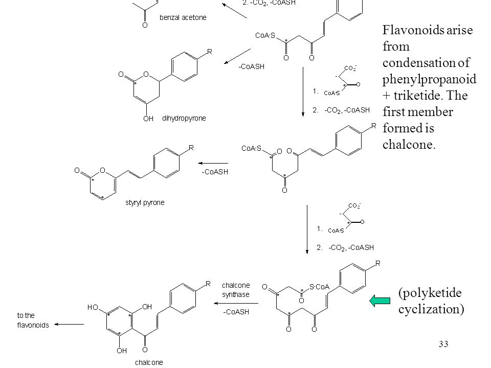 Flavonoids arise from condensation of phenylpropanoid + triketide