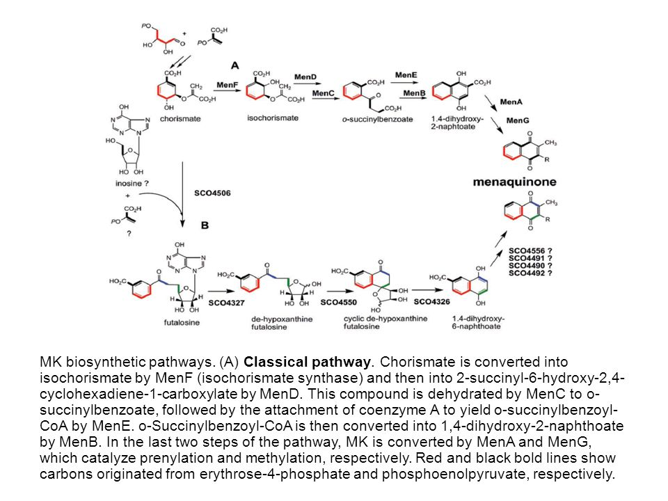 MK biosynthetic pathways. (A) Classical pathway