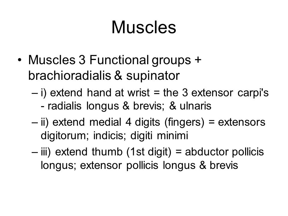 Muscles Muscles 3 Functional groups + brachioradialis & supinator