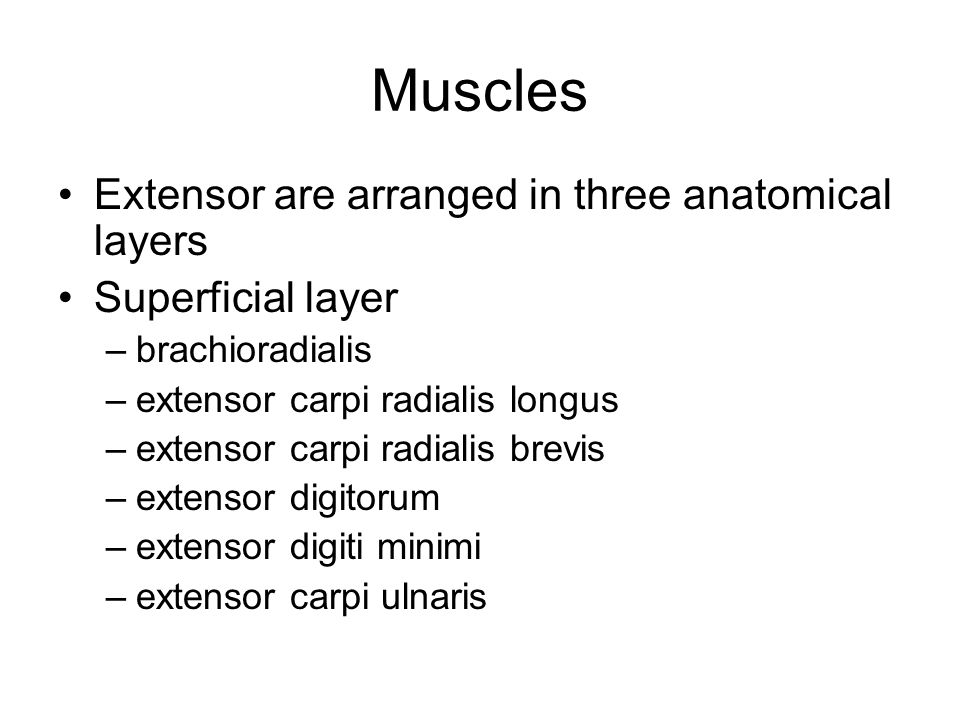 Muscles Extensor are arranged in three anatomical layers