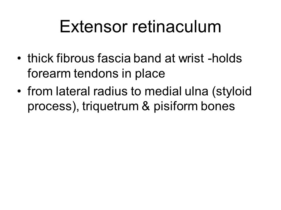 Extensor retinaculum thick fibrous fascia band at wrist -holds forearm tendons in place.