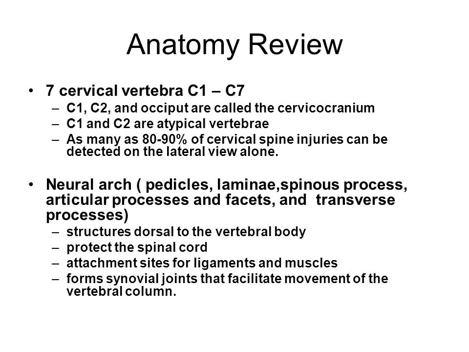 Anatomy Review 7 cervical vertebra C1 – C7