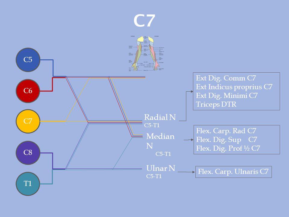 C7 Radial N Median N Ulnar N C5 Ext Dig. Comm C7