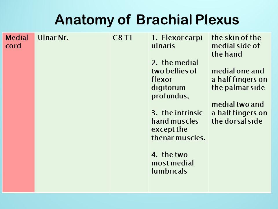 Anatomy of Brachial Plexus