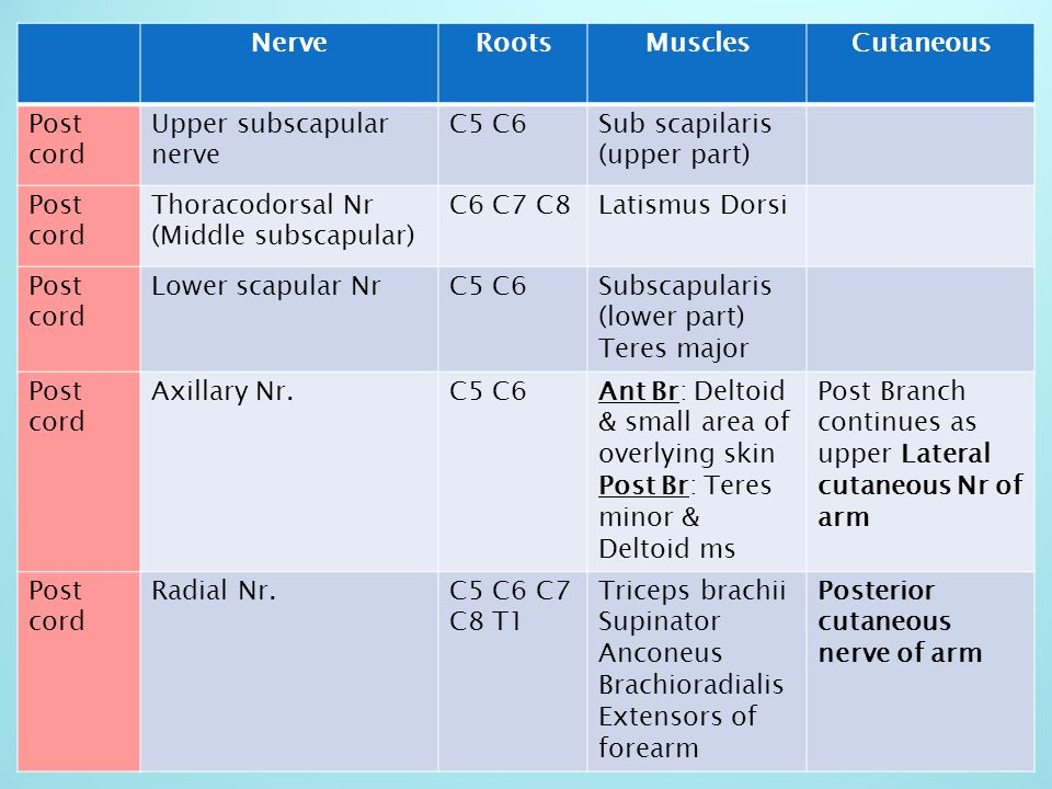 Nerve Roots. Muscles. Cutaneous. Post. cord. Upper subscapular nerve. C5 C6. Sub scapilaris.