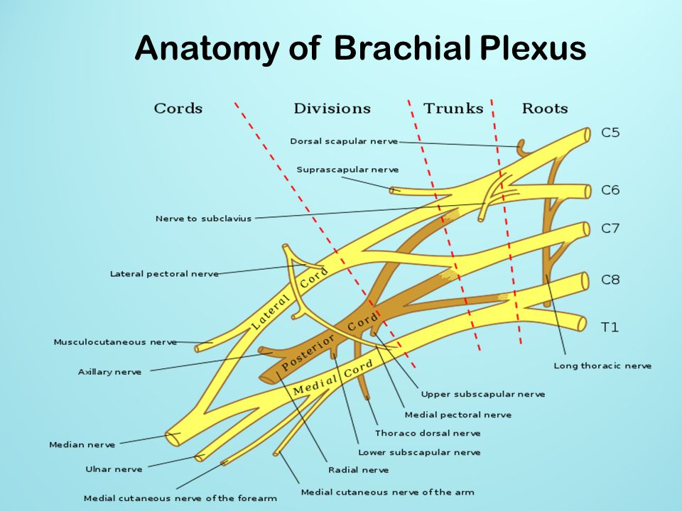 Brachial Plexus Block Above The Clavicle Edited By Dr M. Document Management Policy Print Shop On Line. Paying Off Credit Card Debts. Child Support Credit Card Register Ac Domain. Illinois Whistleblower Reward And Protection Act. Auto Body Repair St Louis Safety On Oil Rigs. Home Refinance Interest Rates. Power Plant Simulation Software. Luxury Hotels In Tel Aviv Condo Insurance Ho6