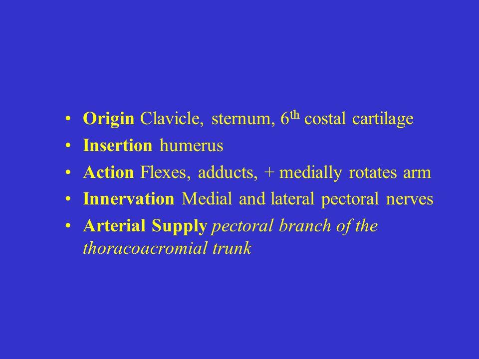 Origin Clavicle, sternum, 6th costal cartilage