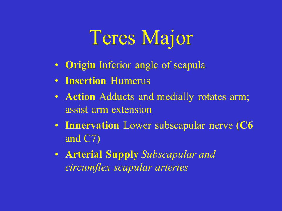 Teres Major Origin Inferior angle of scapula Insertion Humerus