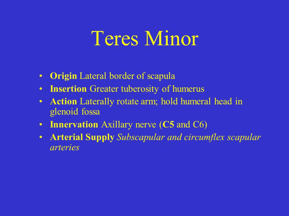 Teres Minor Origin Lateral border of scapula