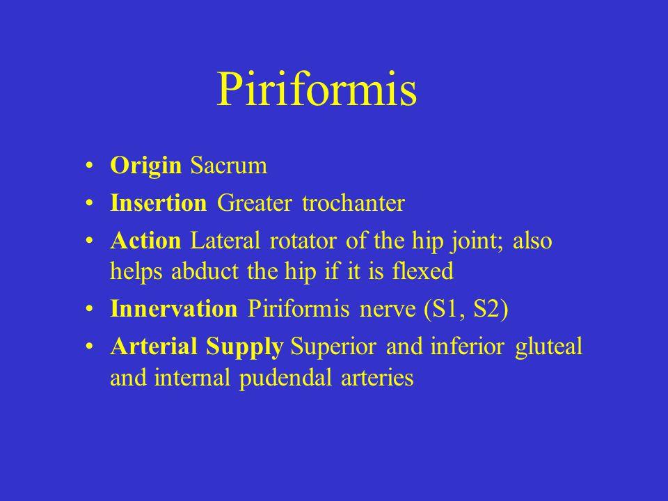 Piriformis Origin Sacrum Insertion Greater trochanter