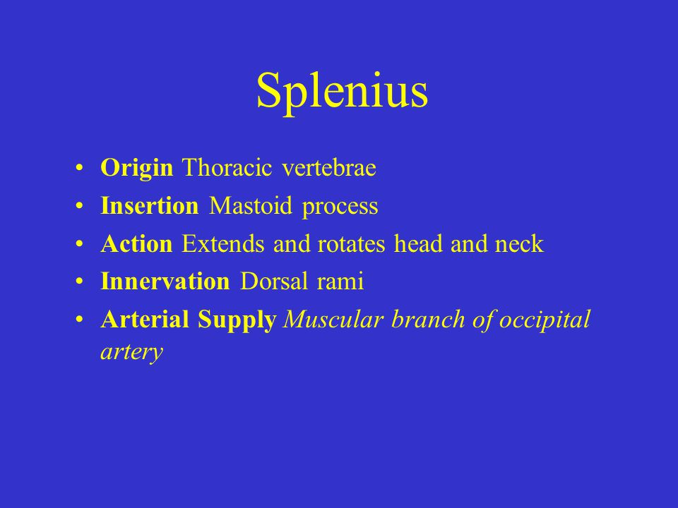 Splenius Origin Thoracic vertebrae Insertion Mastoid process