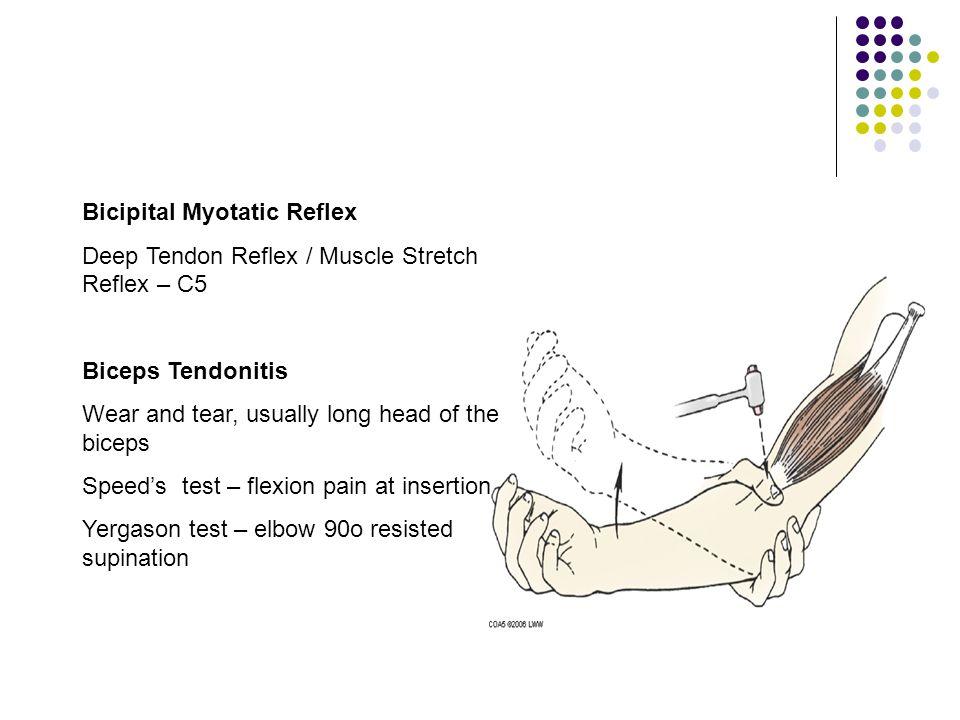 Bicipital Myotatic Reflex