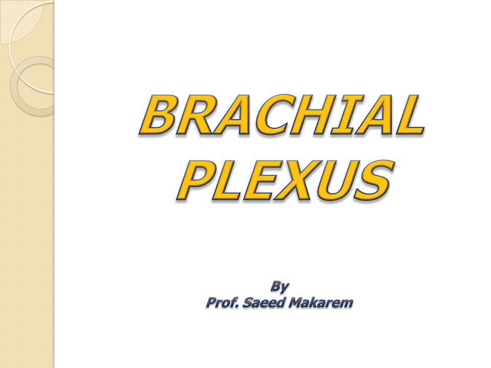 BRACHIAL PLEXUS By Prof. Saeed Makarem