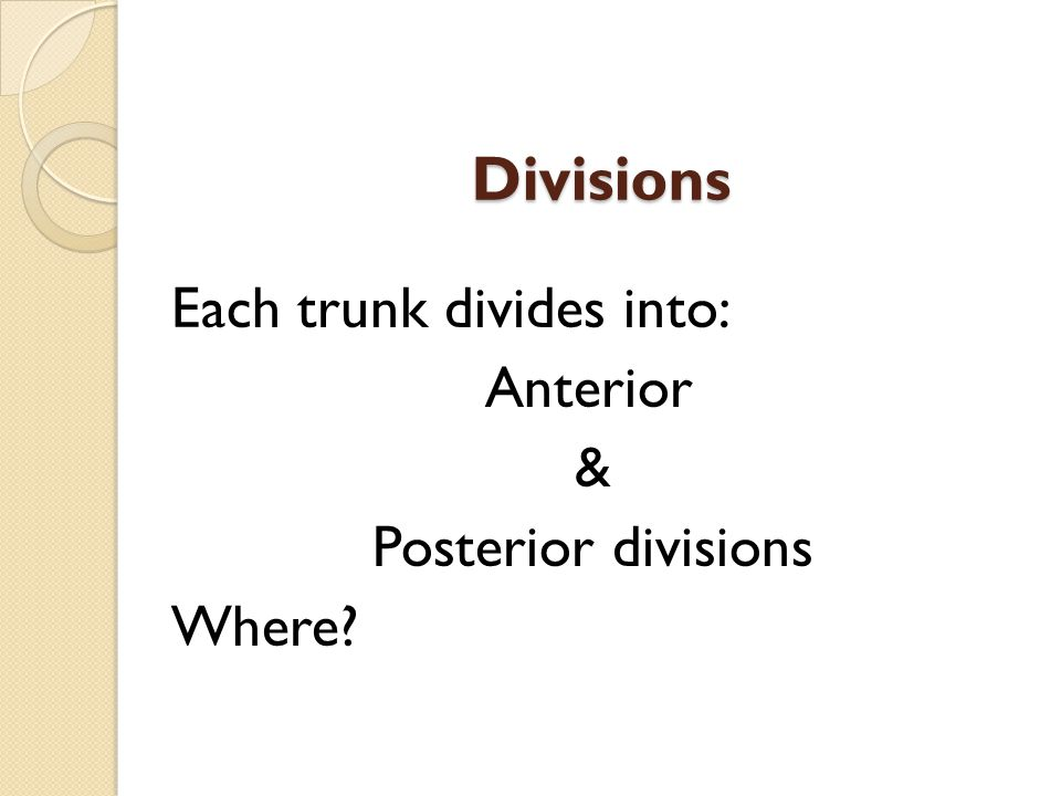 Divisions Each trunk divides into: Anterior & Posterior divisions Where