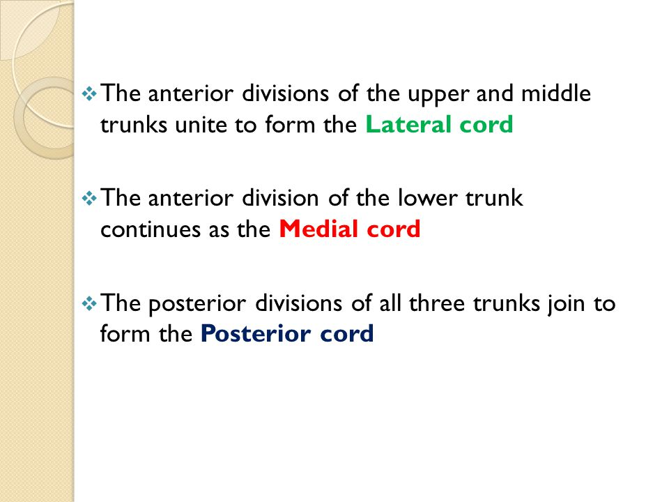 The anterior divisions of the upper and middle trunks unite to form the Lateral cord