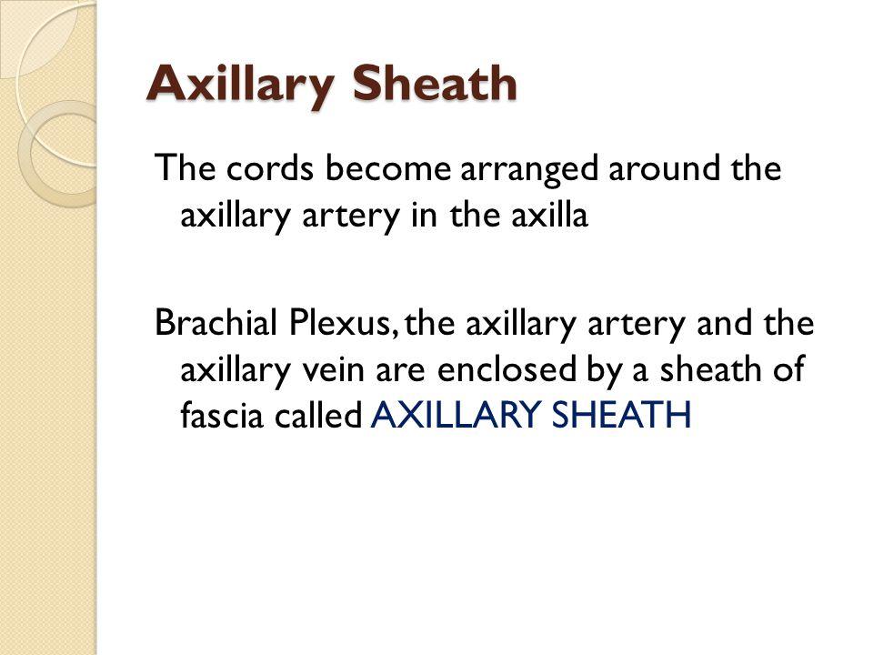 Axillary Sheath