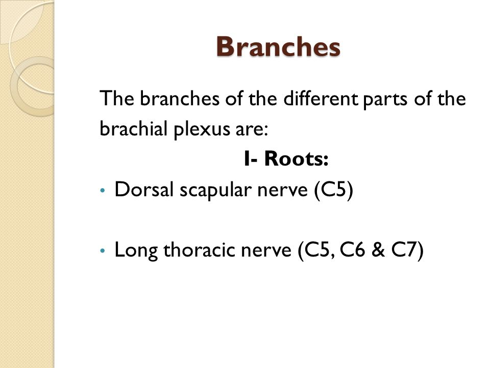 Branches The branches of the different parts of the