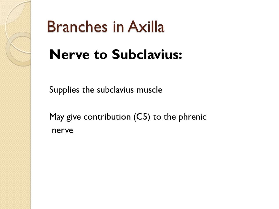 Branches in Axilla Nerve to Subclavius: Supplies the subclavius muscle