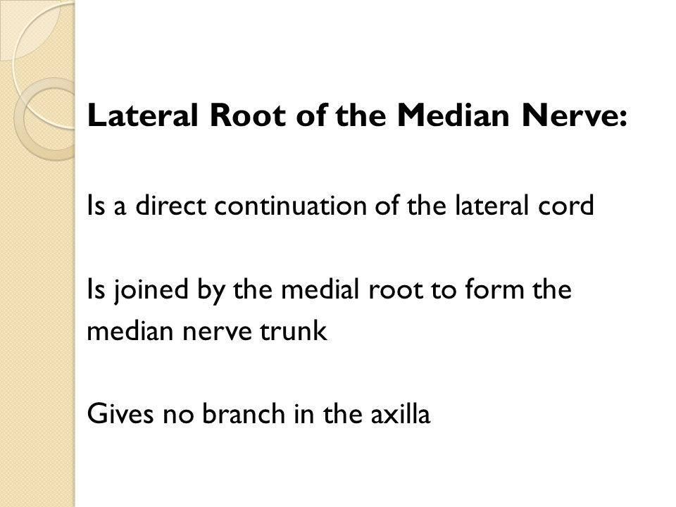Lateral Root of the Median Nerve: