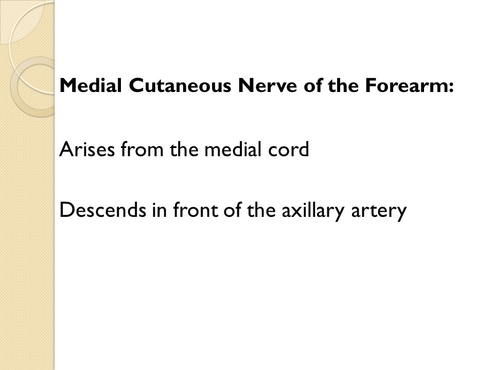Arises from the medial cord Descends in front of the axillary artery