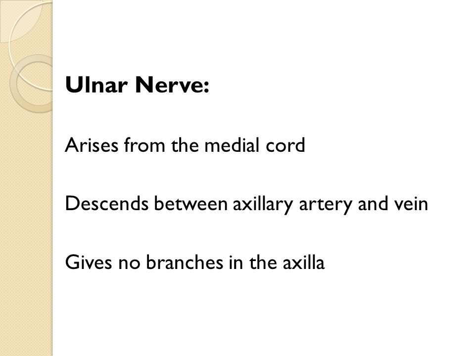 Ulnar Nerve: Arises from the medial cord