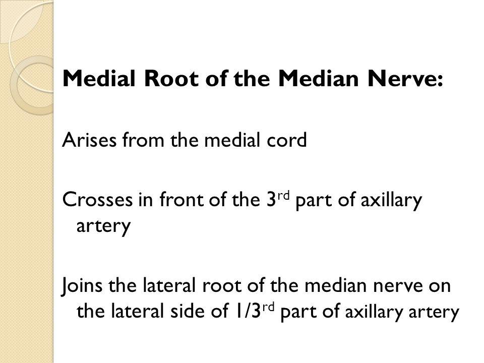 Medial Root of the Median Nerve: