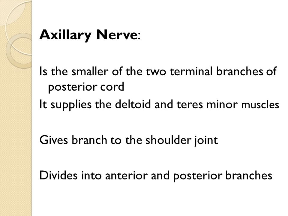 Axillary Nerve: Is the smaller of the two terminal branches of posterior cord. It supplies the deltoid and teres minor muscles.
