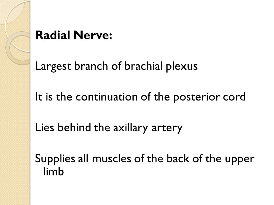 Radial Nerve: Largest branch of brachial plexus It is the continuation of the posterior cord Lies behind the axillary artery Supplies all muscles of the back of the upper limb