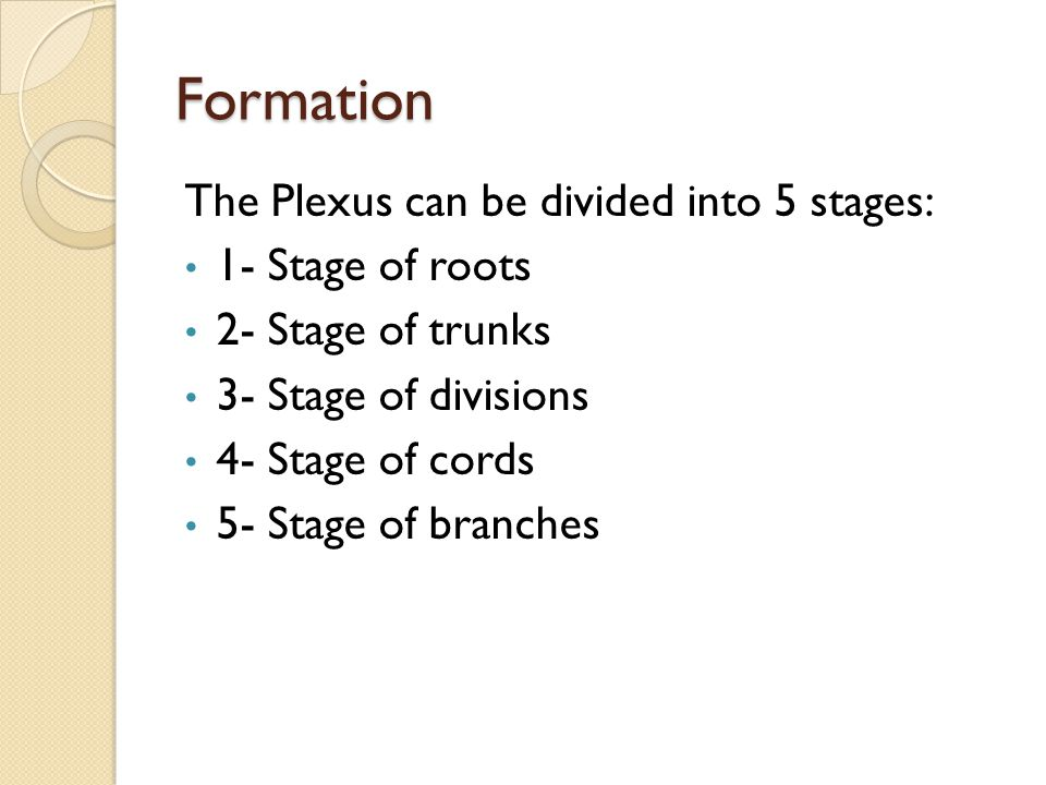 Formation The Plexus can be divided into 5 stages: 1- Stage of roots