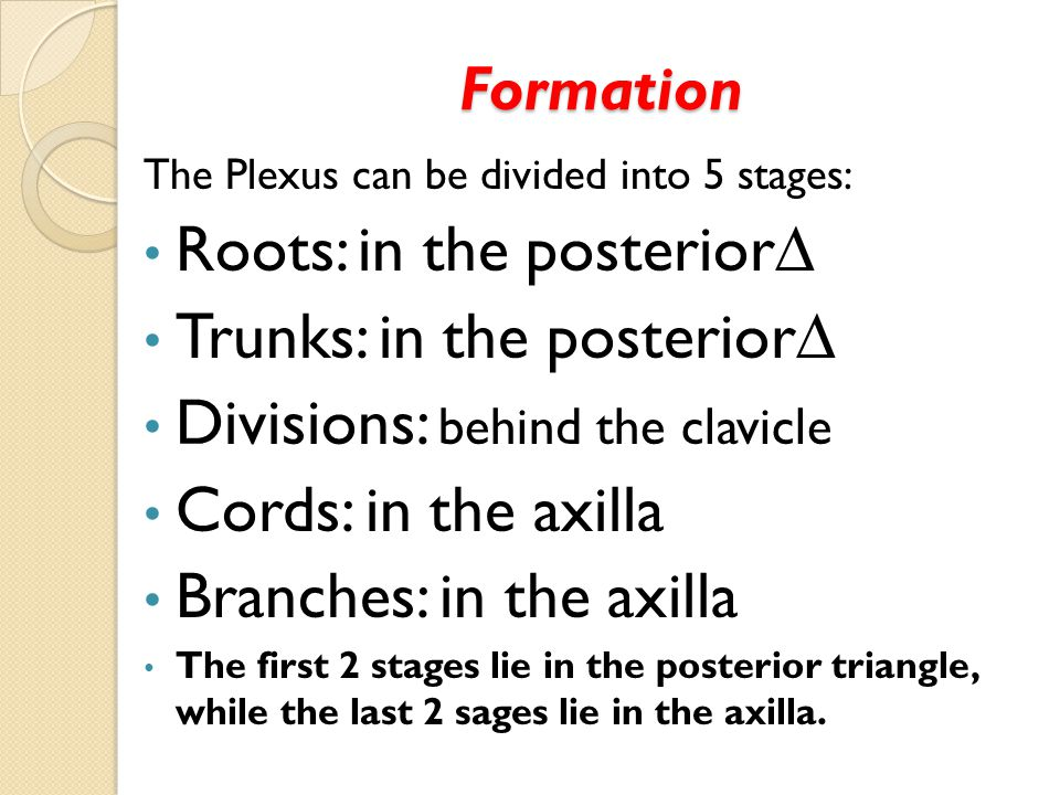 Roots: in the posterior∆ Trunks: in the posterior∆
