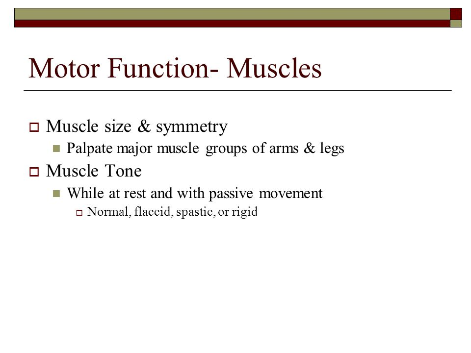 Motor Function- Muscles