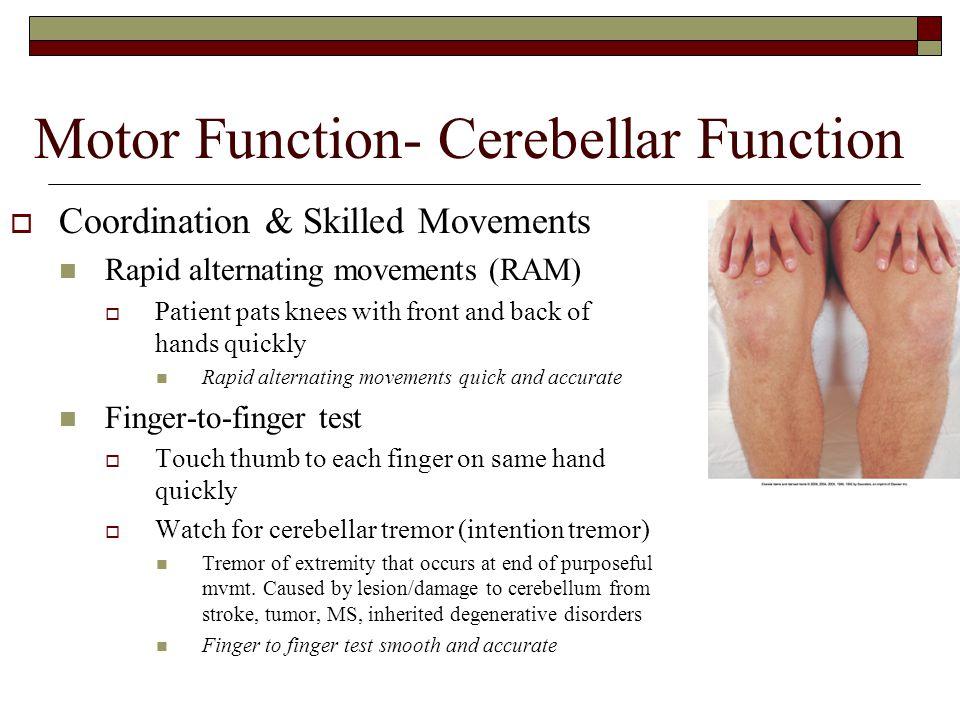 Motor Function- Cerebellar Function