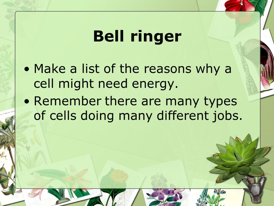 Bell ringer Make a list of the reasons why a cell might need energy.