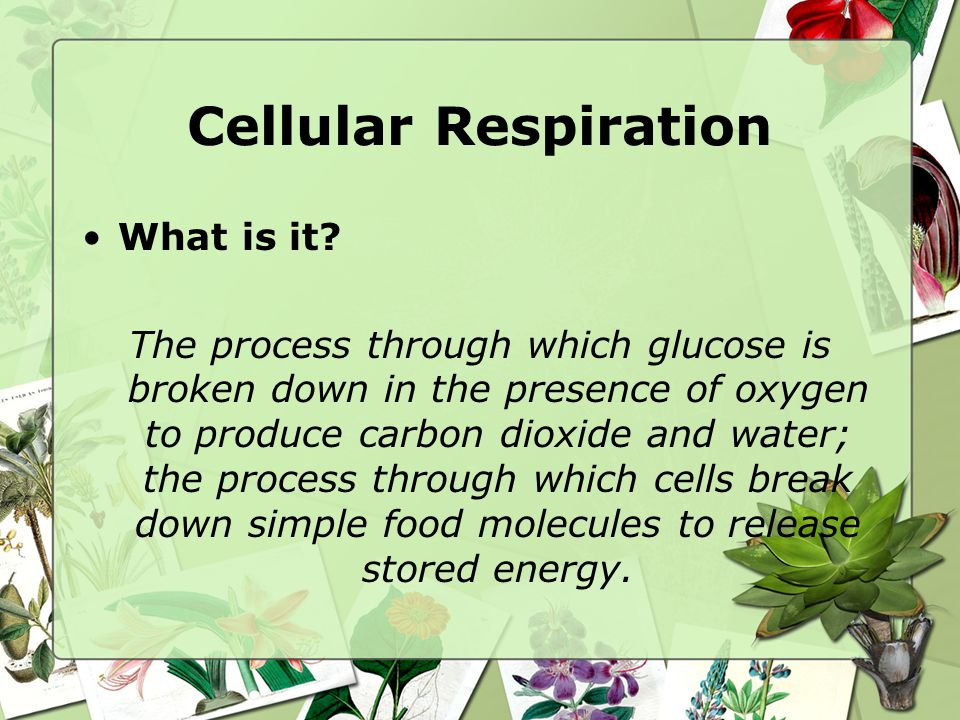 Cellular Respiration What is it