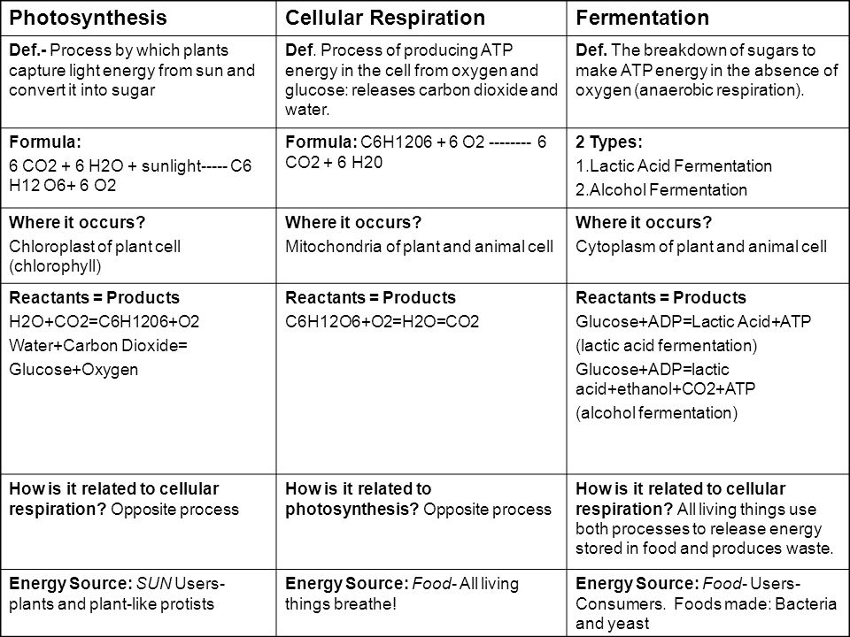 Photosynthesis Cellular Respiration Fermentation