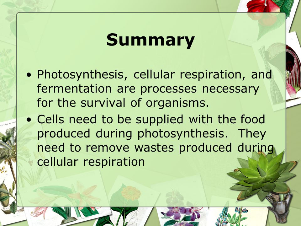 Summary Photosynthesis, cellular respiration, and fermentation are processes necessary for the survival of organisms.
