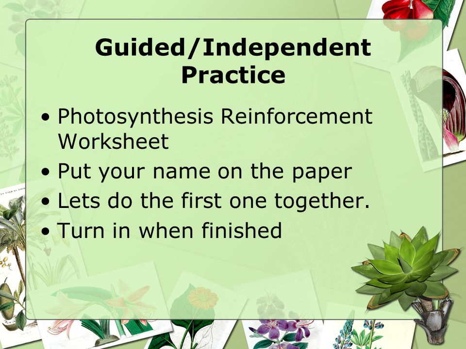 Guided/Independent Practice