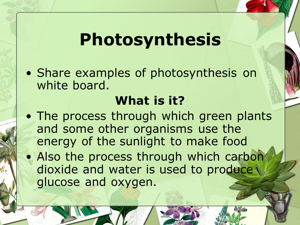 Photosynthesis Share examples of photosynthesis on white board.