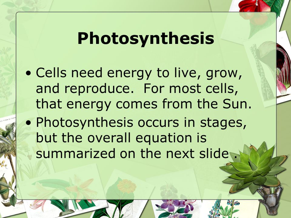 Photosynthesis Cells need energy to live, grow, and reproduce. For most cells, that energy comes from the Sun.