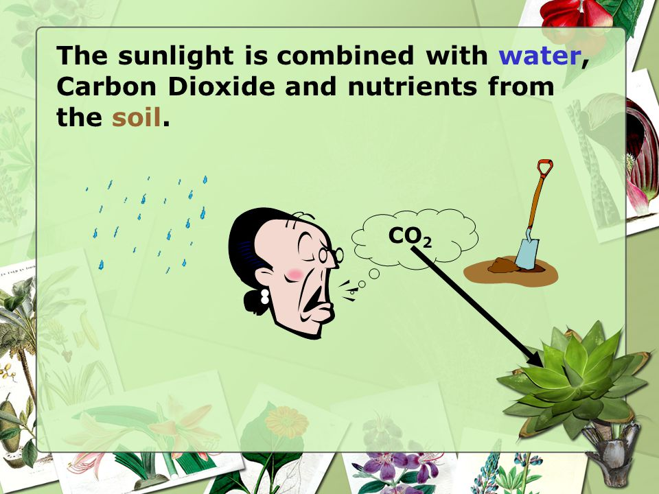 The sunlight is combined with water, Carbon Dioxide and nutrients from the soil.
