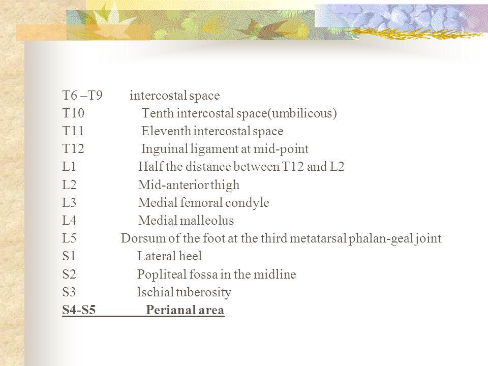 T6 –T9 intercostal space T10 Tenth intercostal space(umbilicous) T11 Eleventh intercostal space.