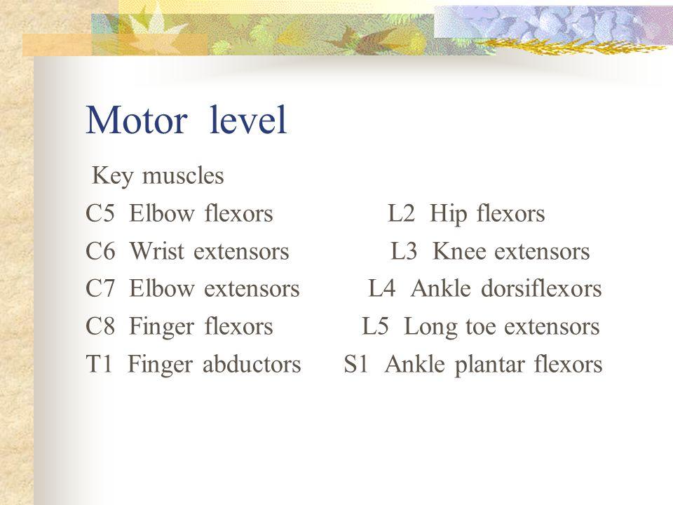 Motor level Key muscles C5 Elbow flexors L2 Hip flexors
